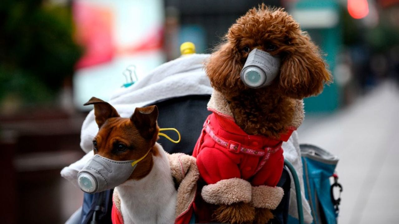 dog tests weak-positive for virus