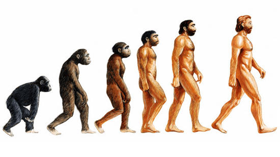 A Guide to Darwin's theory of Evolution by Natural Selection