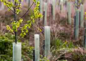 Trees should be planted without plastic guards, says UK study